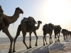 230za Ethiopie dag 3 karavaans