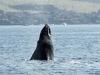 096-hawaii-maui-lahaina-walvis-trip