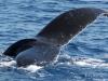 103-hawaii-maui-lahaina-walvis-trip