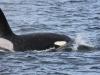 5052 Argentinie-Chili 2014 Ushuaia Estancia Harberton orka's