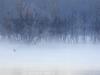 111 Australie Lake Eildon