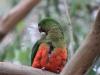 120 Australie Kennett River vogels