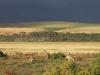 164 Australie Princetown kangoeroes