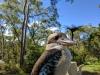 484 Australie Kookaburra