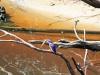 774 Australie rivercruise Arthur River
