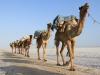 231c Ethiopie dag 3 karavaans