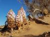 1724-Mongolie-onderweg-Ongi-forest