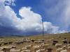 2446-Mongolie-onderweg-naar-Ulziit-Brigad